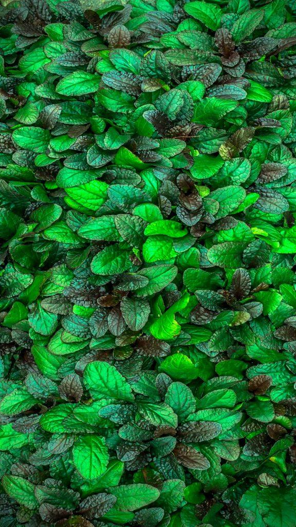 Куст с зелёными листьями