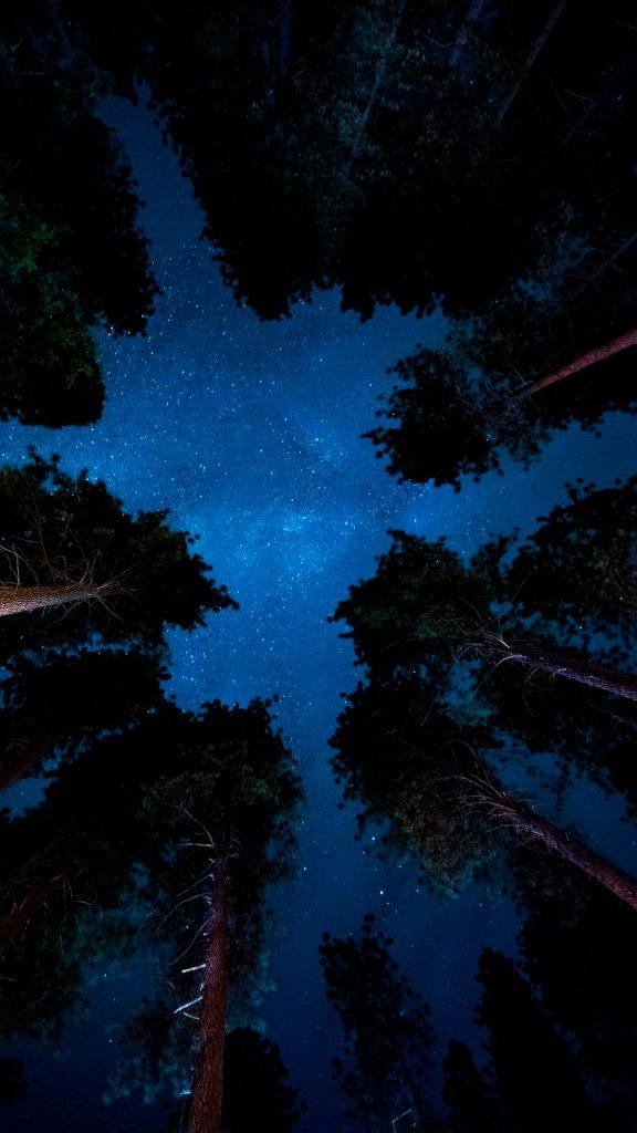 Звёздное небо в лесу